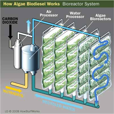 algae-biodiesel-5