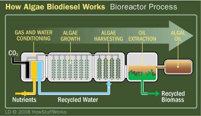 algae-biodiesel-6